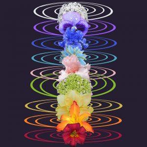 chakra, spiritual, flower